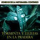 Sonidos De La Naturaleza Continuo: Tormenta Y Lluvias En La Pradera thumbnail