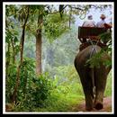 African Journey - Serengeti thumbnail