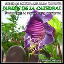 Sonidos Naturales Para Dormir: Jardín De La Catedral thumbnail