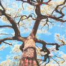 A Storm, A Tree, My Mother's Head thumbnail