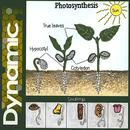 Photosynthesis thumbnail